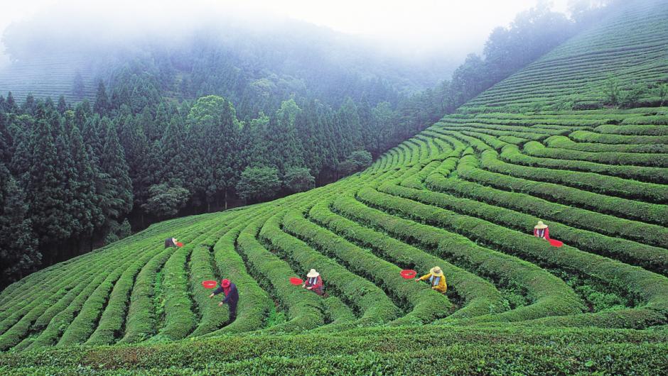 Criza COVID-19 îi împinge online pe fermierii și pescarii din Asia